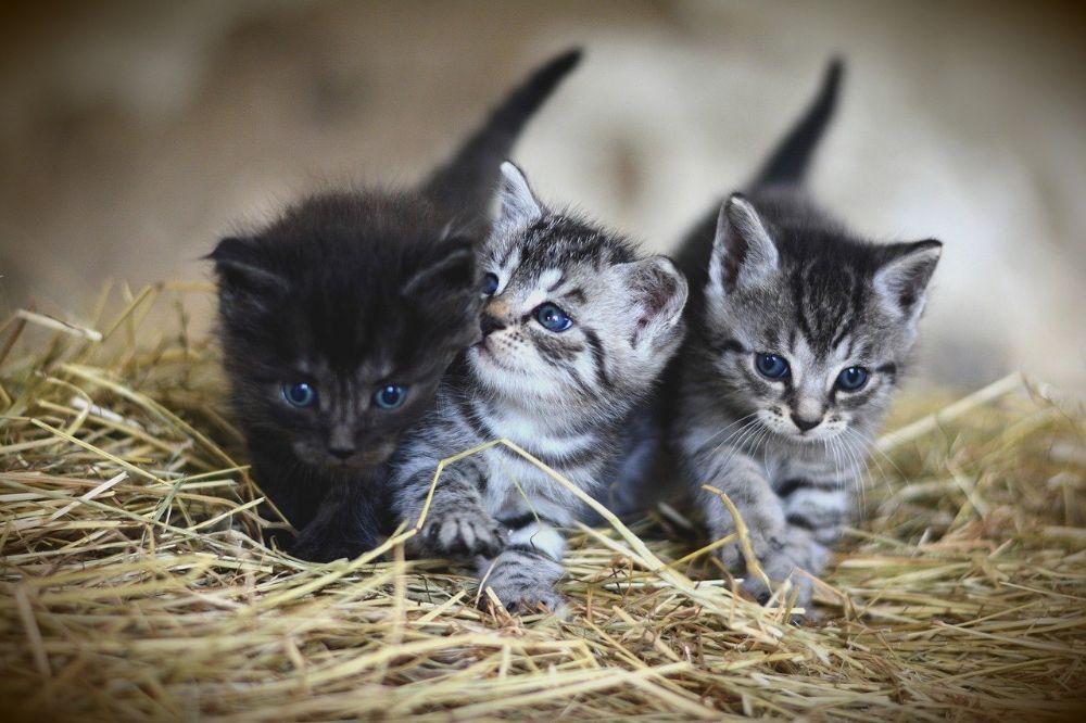 Duurzame verzorging huisdier